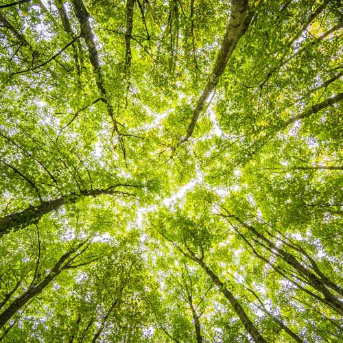Wald mit grünen Bäumen zeigt nachhaltigen Umgang mit Ressourcen