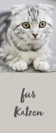 Katzen Grafik Menü