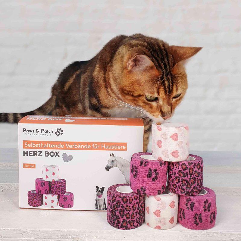 Bandagen Verbände für Katzen