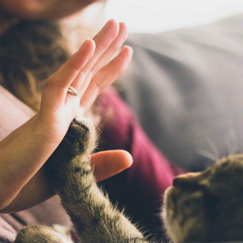 Katzenpfote und Menschenhand schlagen ein