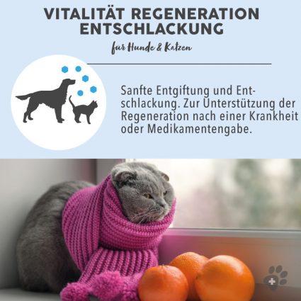 1_BB-Vitalita¨t-Vorteil-1.jpg