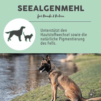 C:UsersUseradminDesktopPaws & PatchProduktfotos2_Vorteil Seealgenmehl 1-8.png