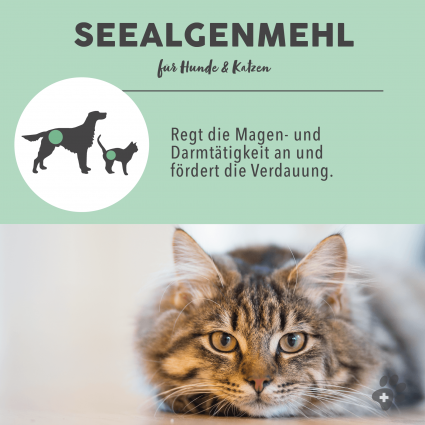 C:UsersUseradminDesktopPaws & PatchProduktfotos2_Vorteil Seealgenmehl 2-8.png