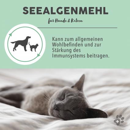 C:UsersUseradminDesktopPaws & PatchProduktfotos2_Vorteil Seealgenmehl 3-8.png